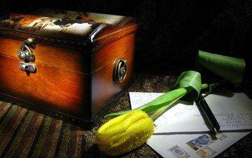 цветок, капли, натюрморт, письма, желтый тюльпан, сундучок