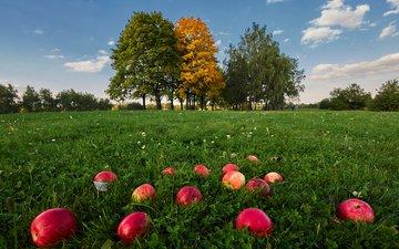 небо, трава, облака, деревья, природа, фрукты, яблоки