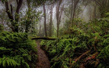 деревья, лес, кусты, тропинка, папоротник, растительность