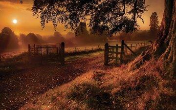 деревья, вечер, природа, забор, ограждение, сумерки