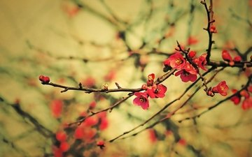 flowers, branch, tree, flowering, flower, branches, spring, plant