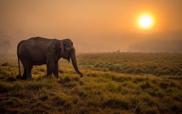 закат, слон, африка, уши, дикая природа, саванна, хобот