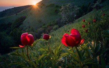 небо, цветы, деревья, горы, солнце, природа, закат, болгария, красные цветы, emil rashkovski