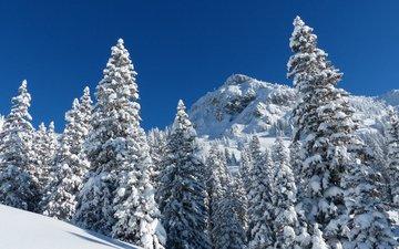 горы, природа, лес, зима