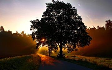 дорога, природа, дерево, пейзаж, утро, рассвет