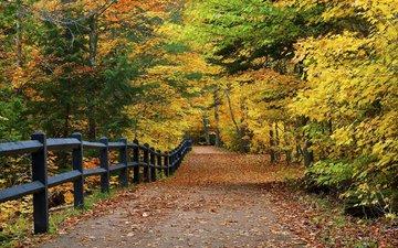 дорога, деревья, природа, парк, осень, забор, аллея