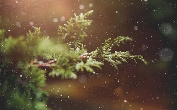 branch, snow, nature, winter, macro, background, plant