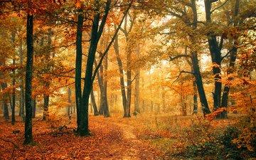 деревья, природа, лес, листья, осень, тропинка