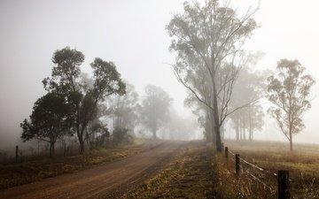 дорога, деревья, природа, туман, забор