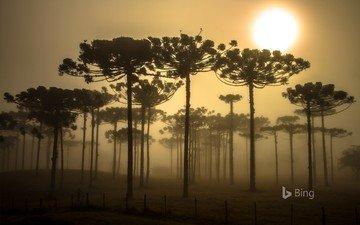 деревья, природа, бразилия, bing
