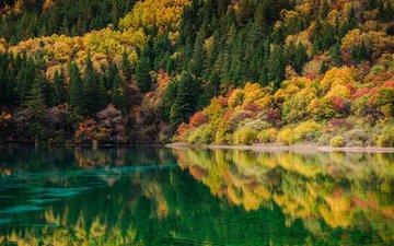река, природа, лес, отражение, пейзаж, осень