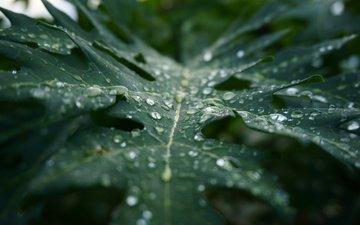 макро, капли, лист, дождь, растение