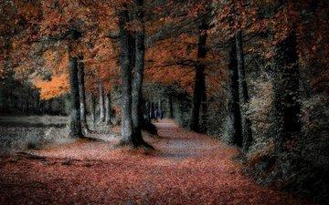 деревья, природа, лес, листья, парк, осень