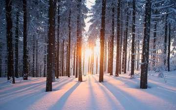 деревья, солнце, снег, природа, лес, зима