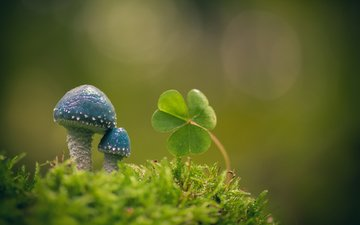 macro, background, mushrooms, moss, leaves, oxalis, stropharia blue-green