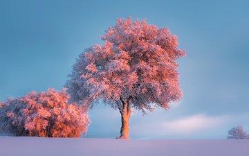 деревья, природа, зима, иней