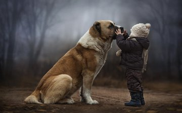 forest, dog, children, child, friendship