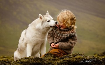 dog, boy, husky, iceland, friendship, friends