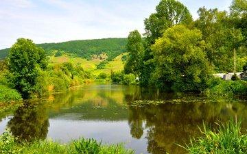 река, зелень, лес, лето, германия, мозель
