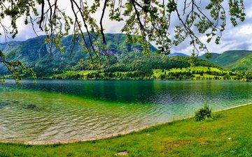 деревья, озеро, зелень, лето, гора, словения, bohinj