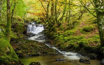 деревья, река, природа, лес, ручей, водопад, осень, мох, речка, шотландия, каскад, beechwood
