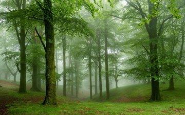 деревья, природа, лес, туман