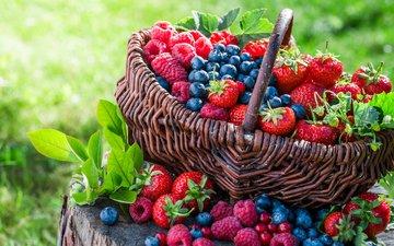 малина, клубника, корзина, ягоды, черника