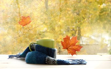 leaves, macro, drops, autumn, rain, mug, window, glass, tea, scarf
