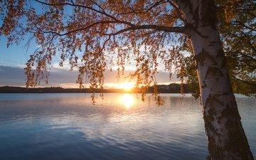 озеро, природа, дерево, закат, пейзаж, осень