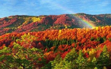 горы, природа, лес, осень, радуга, карпаты
