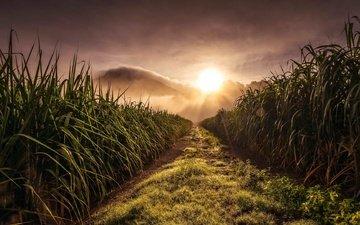 трава, природа, пейзаж, утро, поле, рассвет