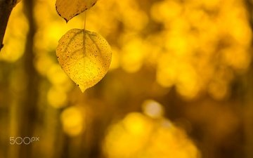 nature, leaves, macro, background, autumn