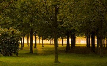 деревья, природа, парк