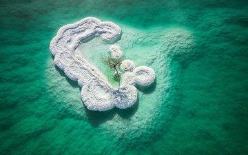 природа, дерево, остров, соль, мертвое море, dead sea