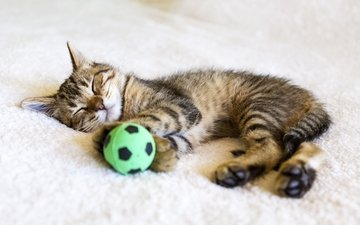 cat, sleep, kitty, the ball