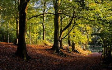 дорога, деревья, природа, лес, парк, осень