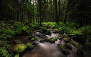 деревья, камни, лес, ручей, мох, папоротник, lena held