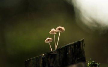 природа, фон, грибы, пенек, lena held