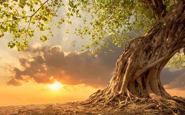 небо, облака, солнце, природа, дерево, ветки, корни, кора