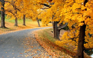 дорога, деревья, природа, осень, листопад, аллея