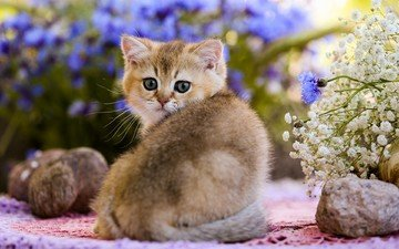 eyes, flowers, stones, cat, look, kitty, cub