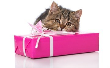 eyes, cat, look, kitty, gift