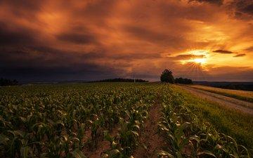небо, дорога, закат, поле, горизонт, lena held