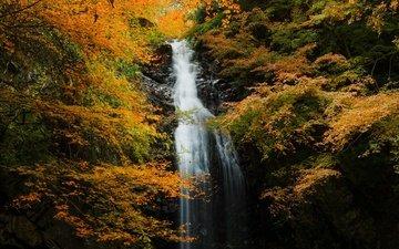 река, природа, лес, скала, водопад, осень, поток