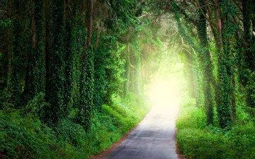 дорога, деревья, природа, лес, парк, мох, аллея