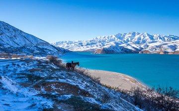 лошадь, озеро, горы, природа, зима