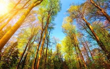 деревья, природа, лес, стволы, солнечный свет