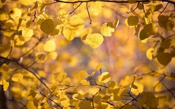 nature, leaves, macro, background, branches, autumn