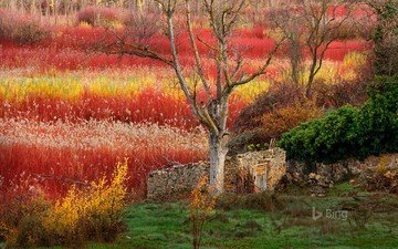 trees, nature, the bushes, spain, hut, bing