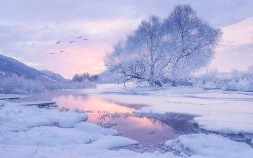 trees, river, snow, nature, winter, morning, birds